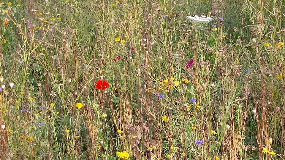 Grüne gegen Industrieflächen auf der Grünen Wiese